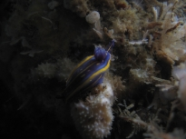 hupselodoris-cantabrique