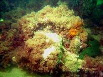 bapteme-tech-ocean-l-arta-23